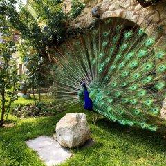Museum Hotel Турция, Учисар - отзывы, цены и фото номеров - забронировать отель Museum Hotel онлайн с домашними животными