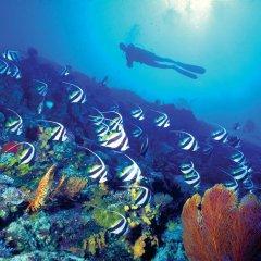 Отель The Westin Denarau Island Resort & Spa, Fiji Фиджи, Вити-Леву - отзывы, цены и фото номеров - забронировать отель The Westin Denarau Island Resort & Spa, Fiji онлайн пляж фото 2
