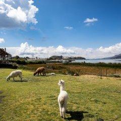 Отель Sonesta Posadas Del Inca Lago Titicaca Пуно фото 6