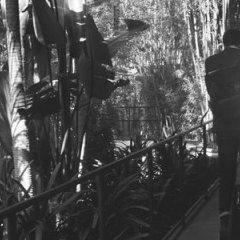 Отель Hollywood Roosevelt Hotel США, Лос-Анджелес - 1 отзыв об отеле, цены и фото номеров - забронировать отель Hollywood Roosevelt Hotel онлайн фото 7