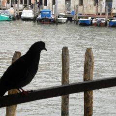 Отель La Felice Canal Grande Италия, Венеция - отзывы, цены и фото номеров - забронировать отель La Felice Canal Grande онлайн приотельная территория