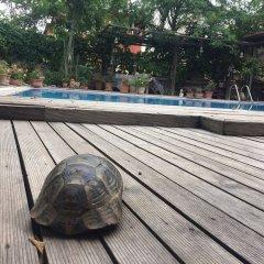 Отель Beydagi Konak бассейн