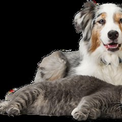 Гостиница Беккер в Янтарном 1 отзыв об отеле, цены и фото номеров - забронировать гостиницу Беккер онлайн Янтарный с домашними животными