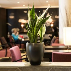 Eden Hotel Amsterdam Амстердам интерьер отеля фото 2