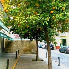 Отель Al Andalus Jerez Испания, Херес-де-ла-Фронтера - отзывы, цены и фото номеров - забронировать отель Al Andalus Jerez онлайн приотельная территория