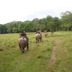 Отель Jungle Safari Lodge Непал, Саураха - отзывы, цены и фото номеров - забронировать отель Jungle Safari Lodge онлайн с домашними животными