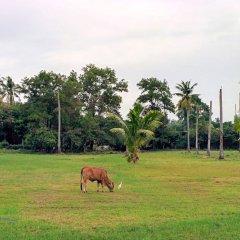 Отель Maikhao Residence с домашними животными