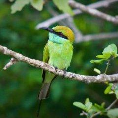 Отель Mahoora Tented Safari Camp - Kumana Шри-Ланка, Яла - отзывы, цены и фото номеров - забронировать отель Mahoora Tented Safari Camp - Kumana онлайн фото 8