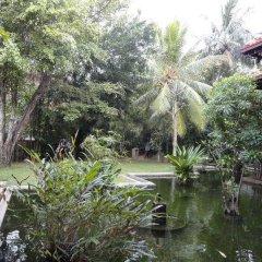 Отель Aida Шри-Ланка, Бентота - отзывы, цены и фото номеров - забронировать отель Aida онлайн фото 4