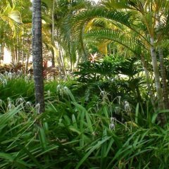 Отель Grand Paradise Playa Dorada - All Inclusive фото 9