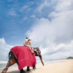 Отель Taj Bentota Resort & Spa Шри-Ланка, Бентота - 2 отзыва об отеле, цены и фото номеров - забронировать отель Taj Bentota Resort & Spa онлайн приотельная территория фото 2