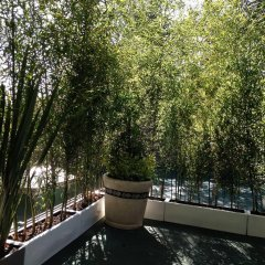 Отель Pug Seal B&B Coyoacan Мексика, Мехико - отзывы, цены и фото номеров - забронировать отель Pug Seal B&B Coyoacan онлайн балкон