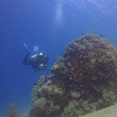 Отель Red Sea Dive Center спортивное сооружение