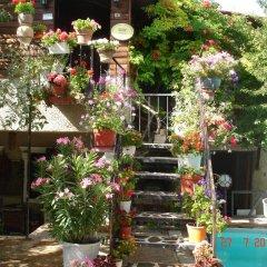 Отель Kapor Organik çiftlik evi Аванос фото 3