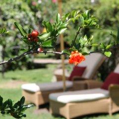 Отель Gartenresidence Zea Curtis Италия, Меран - отзывы, цены и фото номеров - забронировать отель Gartenresidence Zea Curtis онлайн фото 7