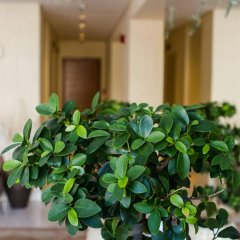 Отель Bellevue Suites Греция, Родос - отзывы, цены и фото номеров - забронировать отель Bellevue Suites онлайн интерьер отеля