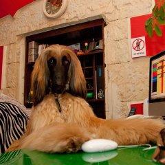 Maison Miramare Boutique Hotel с домашними животными