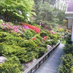 Отель Swiss Pension Южная Корея, Пхёнчан - отзывы, цены и фото номеров - забронировать отель Swiss Pension онлайн фото 5
