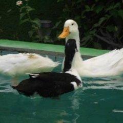 Отель Antalya Farm House с домашними животными