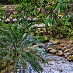 Отель Chachagua Rainforest Ecolodge фото 18