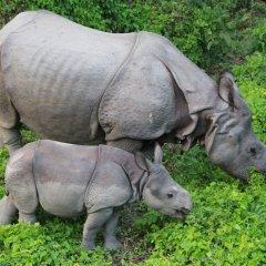 Отель Rhino Lodge & Hotel Непал, Саураха - отзывы, цены и фото номеров - забронировать отель Rhino Lodge & Hotel онлайн парковка