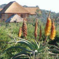 Отель Addo Afrique Estate фото 4