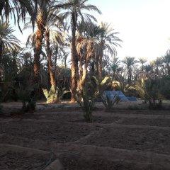 Отель Riad Tagmadart Ferme D'hôte Марокко, Загора - отзывы, цены и фото номеров - забронировать отель Riad Tagmadart Ferme D'hôte онлайн пляж