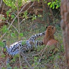 Отель Mahoora Tented Safari Camp All-Inclusive - Yala фото 5