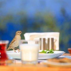 Mavilim Турция, Патара - отзывы, цены и фото номеров - забронировать отель Mavilim онлайн помещение для мероприятий