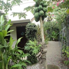 Отель Cabinas Tropicales Puerto Jimenez Ринкон фото 10