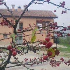 Отель Agriturismo Ben Ti Voglio Италия, Болонья - отзывы, цены и фото номеров - забронировать отель Agriturismo Ben Ti Voglio онлайн пляж