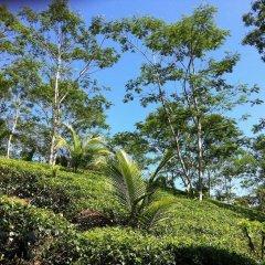Отель Niyagama House Шри-Ланка, Галле - отзывы, цены и фото номеров - забронировать отель Niyagama House онлайн фото 11