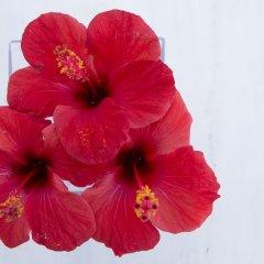 Отель Meli Meli Греция, Остров Санторини - отзывы, цены и фото номеров - забронировать отель Meli Meli онлайн питание