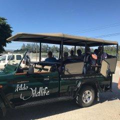 Отель Addo Wildlife Южная Африка, Аддо - отзывы, цены и фото номеров - забронировать отель Addo Wildlife онлайн городской автобус