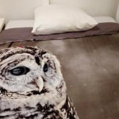 Отель Amsterdam Centre Rooms с домашними животными