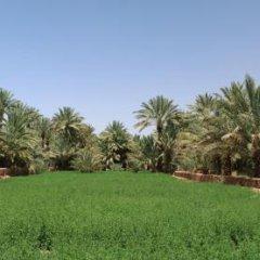 Отель Dar Pienatcha Марокко, Загора - отзывы, цены и фото номеров - забронировать отель Dar Pienatcha онлайн фото 3