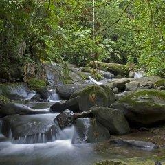 Отель Rios Tropicales бассейн