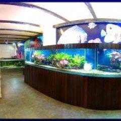 Гостиница Дельфин развлечения
