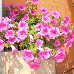 Отель B&B Villa Maria Giovanna Италия, Джардини Наксос - отзывы, цены и фото номеров - забронировать отель B&B Villa Maria Giovanna онлайн фото 19