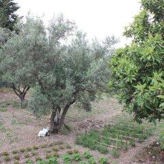 Отель Agriturismo Petrara Италия, Катандзаро - отзывы, цены и фото номеров - забронировать отель Agriturismo Petrara онлайн фото 3