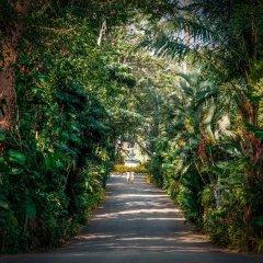 Отель Thavorn Palm Beach Resort Phuket Таиланд, Пхукет - 10 отзывов об отеле, цены и фото номеров - забронировать отель Thavorn Palm Beach Resort Phuket онлайн