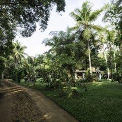 Отель Nisala Arana Boutique Hotel Шри-Ланка, Бентота - отзывы, цены и фото номеров - забронировать отель Nisala Arana Boutique Hotel онлайн фото 12