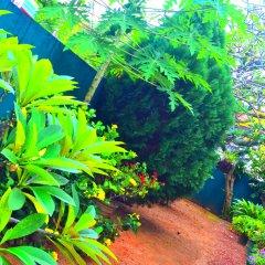 Отель Chaya Villa Guest House Шри-Ланка, Берувела - отзывы, цены и фото номеров - забронировать отель Chaya Villa Guest House онлайн приотельная территория фото 2