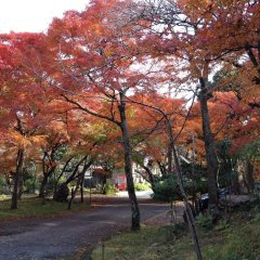 Отель Cultural Property Of Japan Senzairo Йоро фото 7