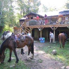 Отель Algonquin Eco-Lodge с домашними животными