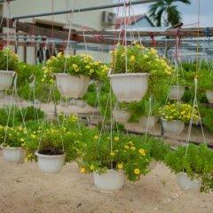 Гостевой Дом Petunia Garden Homestay пляж