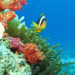 Отель Red Sea Dive Center фото 2