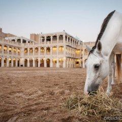 Отель Sealine Beach - a Murwab Resort Катар, Месайед - отзывы, цены и фото номеров - забронировать отель Sealine Beach - a Murwab Resort онлайн с домашними животными