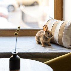 Отель Калейдоскоп на Мойке Санкт-Петербург с домашними животными