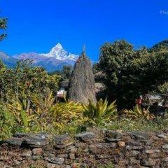 Отель Aroma Tourist Hostel Непал, Покхара - отзывы, цены и фото номеров - забронировать отель Aroma Tourist Hostel онлайн фото 6